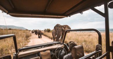 Wie Sie sich auf Ihre erste Safari vorbereiten